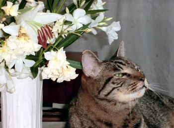 トラ.花.12.jpg