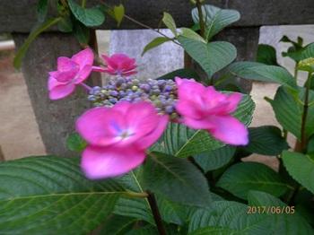 P6050059.yy88.1500.jpg