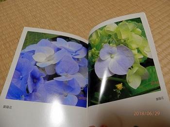 P6291245.yy88.1600.jpg